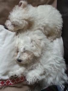 Minnie & Maisie - deanysdesigns.co.uk